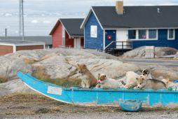 Schlittenhund-Welpen-Groenland-Fotoreise