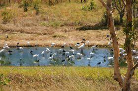 fogg-dam-vogelarten