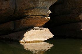 geikie-gorge-krokodil