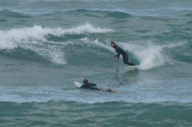 port-elliot-surfer