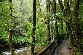 tasmanien-franklin-river