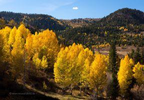 Colorado-Hochland-Espen