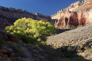 Grand-Canyon-Aufstieg